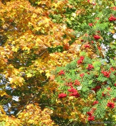 Осенние листья - стихотворение