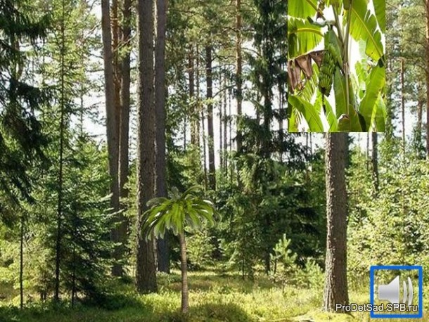 неправильный лес