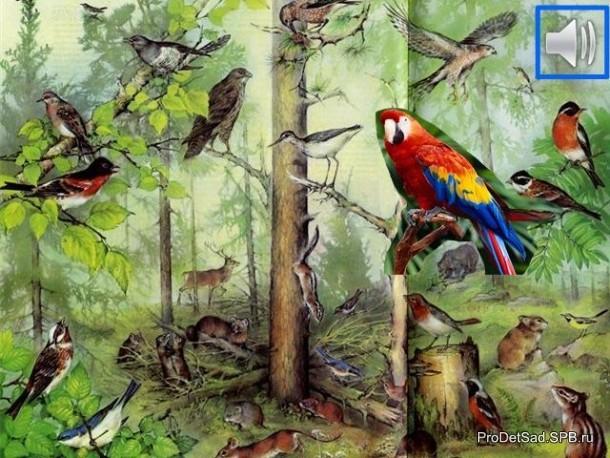 птицылесные и попугай