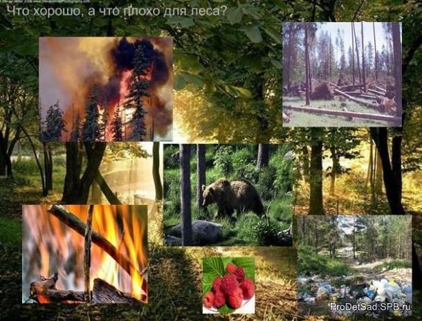 что плохо для леса