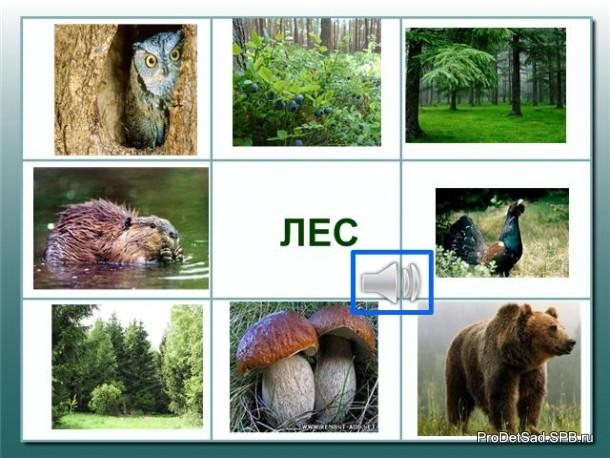 мнемотаблица про лес