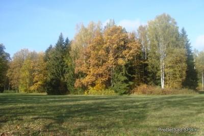 Лес - конспект занятия в условиях ФГТ - старшая группа