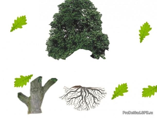 части деревьев