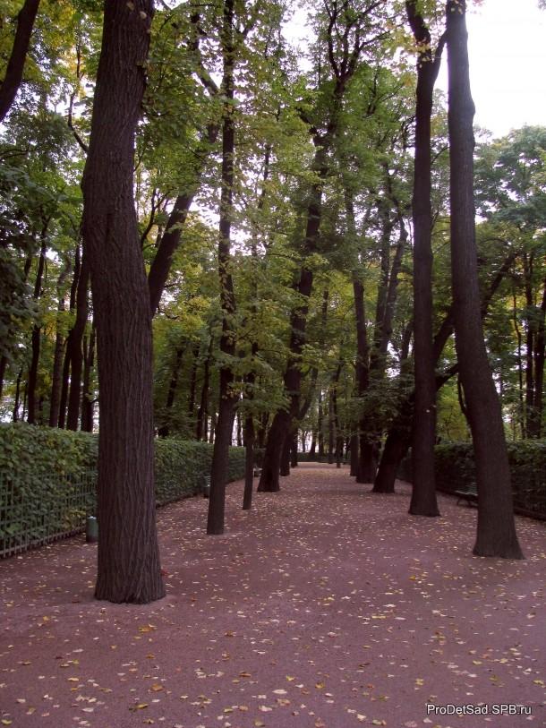 аллея Летнего сада в октябре 2013