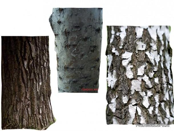 кора разных деревьев - березы, дуба, рябины